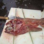 鮎の味比べ調査